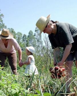 Operaciones auxiliares de preparación del terreno, plantación y siembra de cultivos agrícolas.