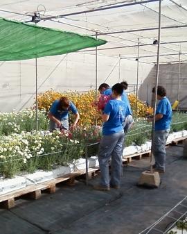 Operaciones auxiliares de riego, abonado y aplicación de tratamientos en cultivos agrícolas.