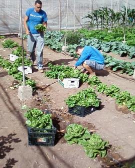 Operaciones culturales en los cultivos y de mantenimiento de instalaciones en explotaciones agrícolas