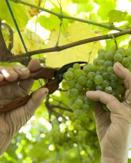 Viticultura, enología y cata